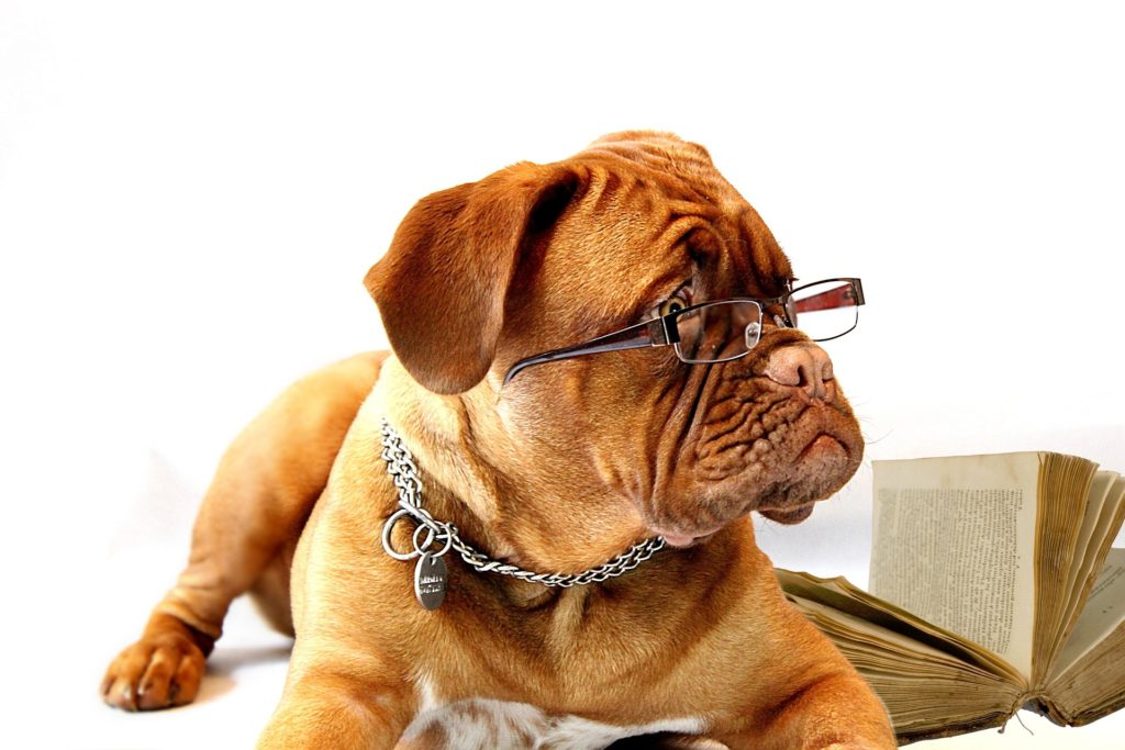 Studying Dog with Glasses